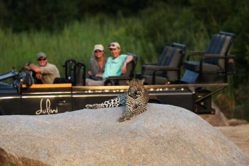 SOUTH AFRICA 2. Dulini Leopard on Rock