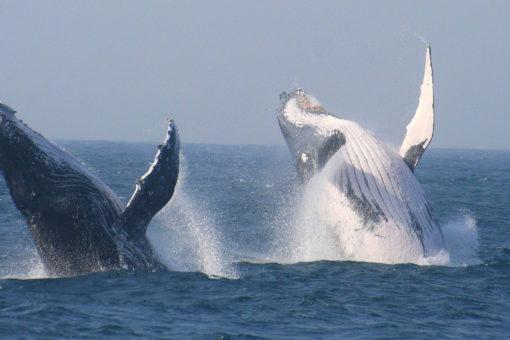 Cape Town - #4 - Wildlife and Marine Safari