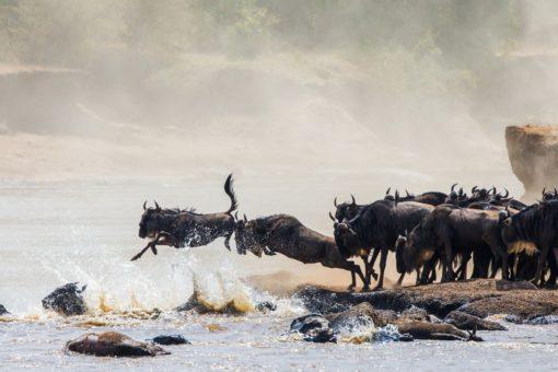 TANZANIA 1 . Serengeti migration - Serengeti Sojourn Camp