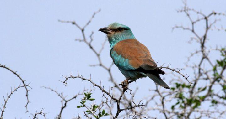 Rabat accueille un atelier de lancement de la liste rouge des oiseaux au Maroc
