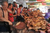 Chinese dog torture festival causes a major stir