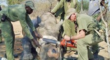 Shock as Poachers Hack Environmentalists' GPS Signals to Hunt Endangered Animals