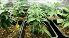 Marijuana Biggest Mysteries That Researchers Are Still Trying to Solve