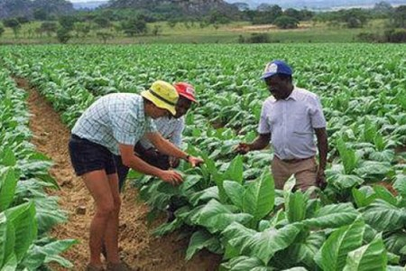 Is Mugabe About to Kick Out Remaining White Farmers?