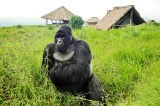 DR Congo Will Open Virunga, Salonga Parks to Oil Companies