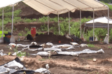 Dozens of bodies exhumed in Texas likely those of black inmates forced to work on plantations