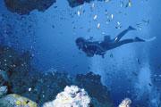 Mozambique Diving Image