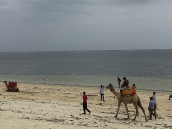 Nips was SUPER brave and went for a camel ride with Fungai. Camels are HUGE...especially for a two-year-old!