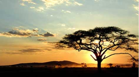 sogno-africano