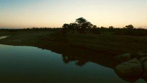 Spotting Hippos in the Timbavati