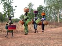 Baskets to Market