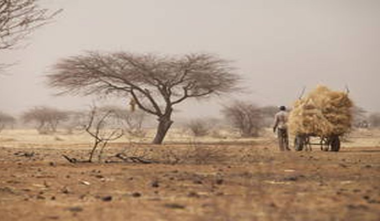 10 million hectares a year in need of restoration along the Great Green Wall