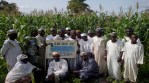 Sasakawa Africa's quest for ending hunger in Nigeria