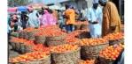 TOGAN laments illegal dumping of tomato in Nigeria
