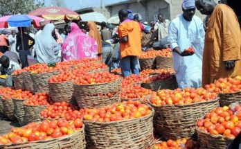 Harvested tomatoes at an unnamed market in northern Nigeria Credit: Daily Post