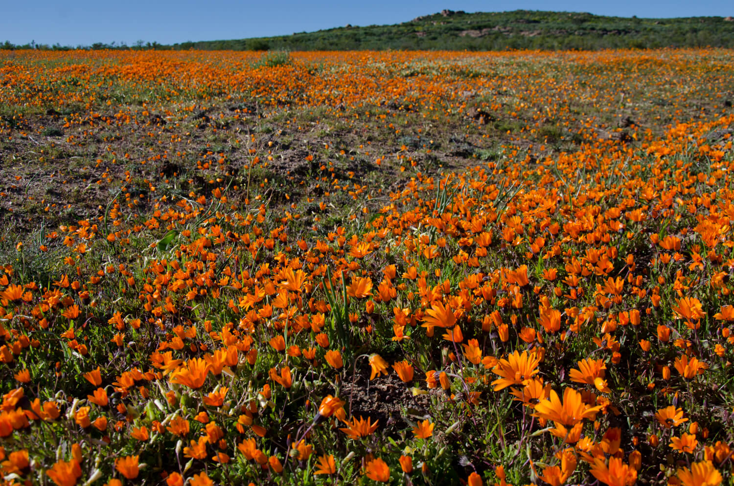 A Guide To South Africa S Spring Flowers