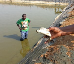 bwa-fish-harvest-for-sept-2016-e-news20160914_092003
