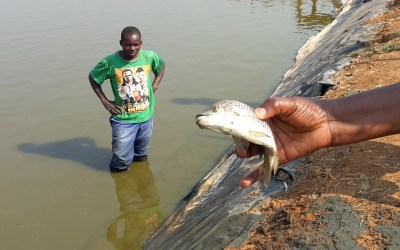 One fish…One fish farm…can make a difference