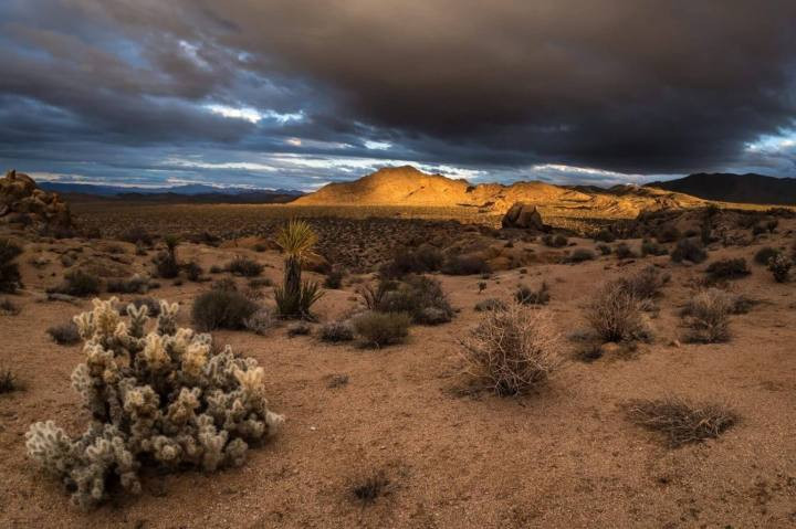 Joshua Tree National Park: The wildflower season usually kicks off in late February