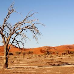Kalahari desert - South Africa