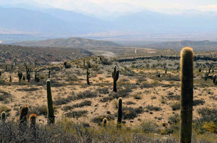 The natural richness of the life desert