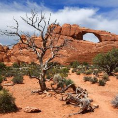 Desert solitaire : Edward Abbey was park ranger at Arches National Monument in the late 1950s