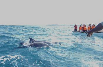 Dolphin tour in Zanzibar near Jambo beach