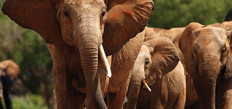 3 Days Kenya Masai Mara Safari from Kisumu