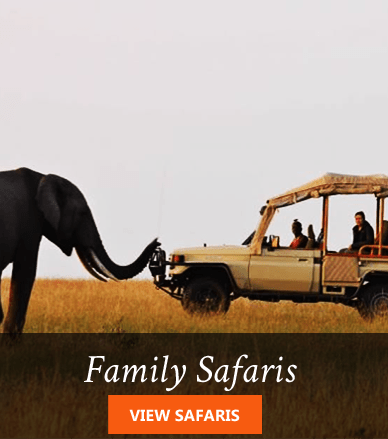 kenya family safaris