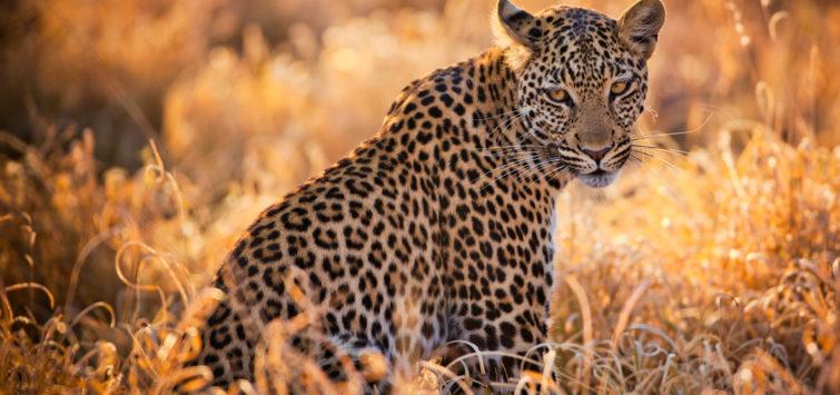 8 Days Botswana Africa Safari botswana-savute