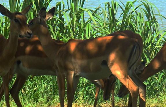 Impala Sanctuary Kisumu