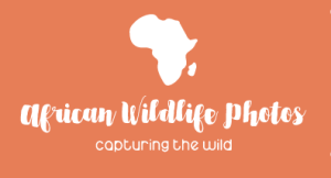 African Wildlife Photos