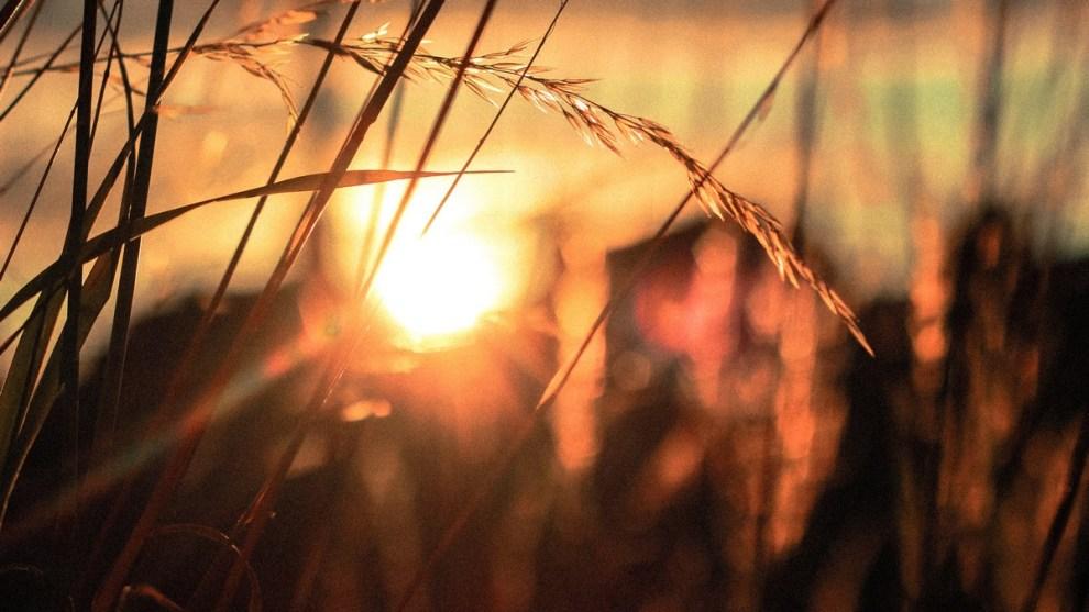rise at dawn