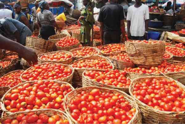 Kano Sets Up C'tee To Boost Tomato Processing and Marketing