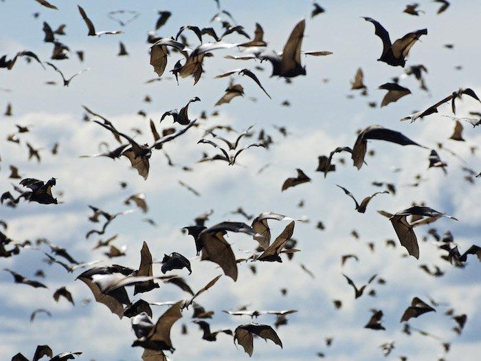 Zambia: un safari tra i pipistrelli