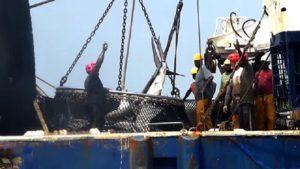 Pêche thonière au Gabon