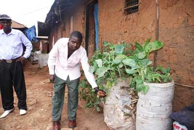 Como los huertos cerradura de Suazilandia, este huerto sirve a las necesidades de una familia en un minúsculo pedazo de tierra