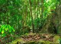 Jungle forest. Tropical trees in Asia.