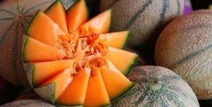 melon 5