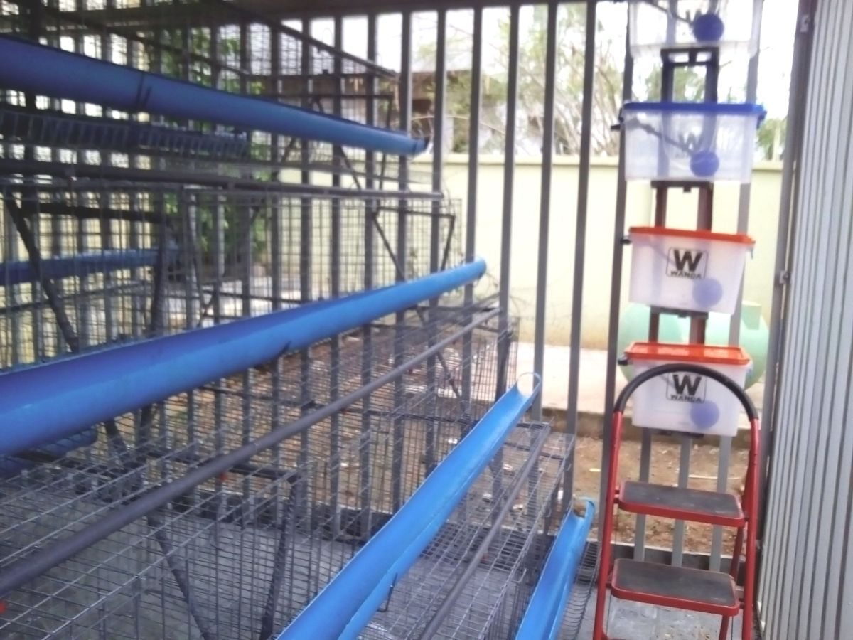 The cages' wire mesh is made of galvanized iron which prevent rusting and give the cages a longer life span.