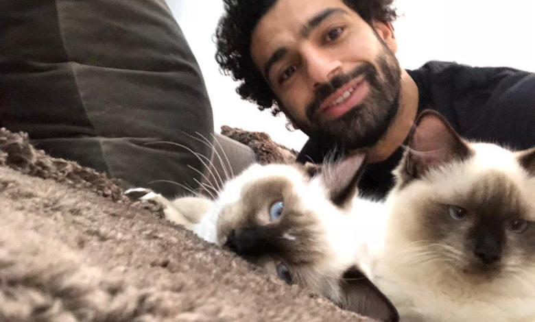 "Photo of ""No to animal rights violations,"" Mo Salah join the protest"