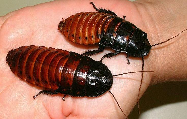 """Photo of China breeds cockroaches massively – """"catastrophe"""" when they escape"""