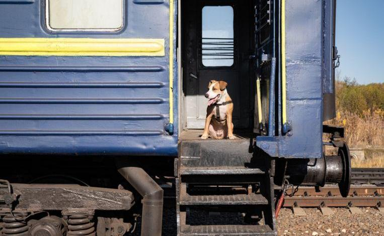 Photo of Amazing: Escaped dog boards train to return on its own