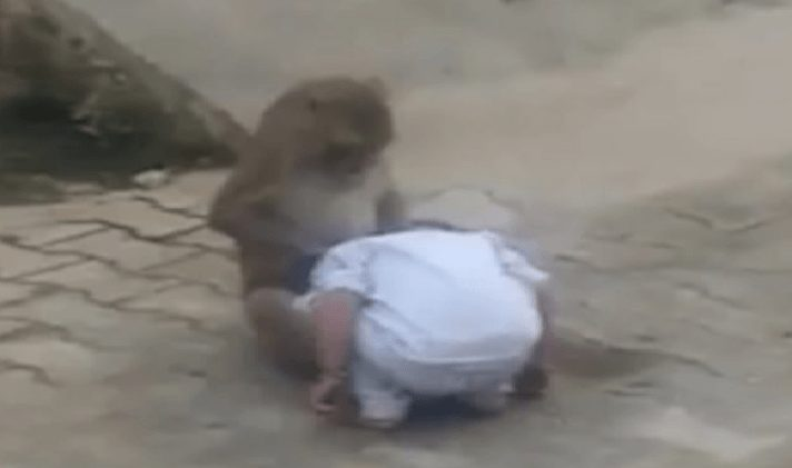 Lonely monkey wants a companion, then abducts 2-year-old [Video]