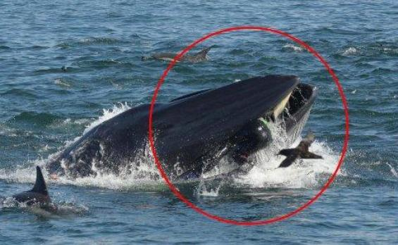 "Diver swallowed and spat out by a whale: ""There was no time for fear"""