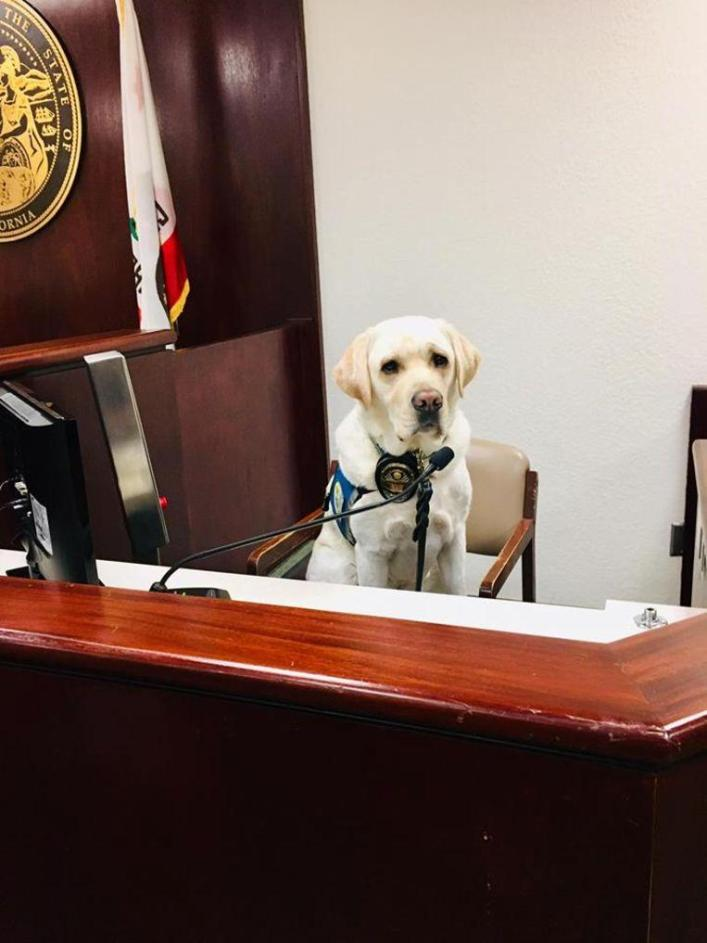 Assistance dog Raider helps 12 children during emotional lawsuit