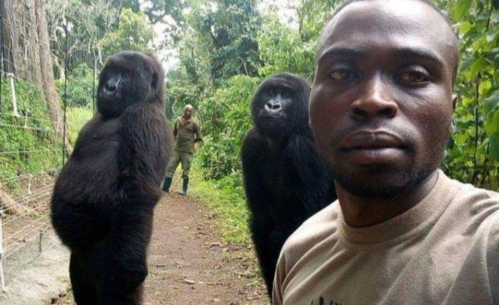 Viral photos of gorillas that posed with ranger for selfie