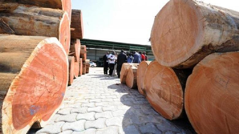 Photo of In Gabon, top officials suspended for 'kevazingo' timber trafficking