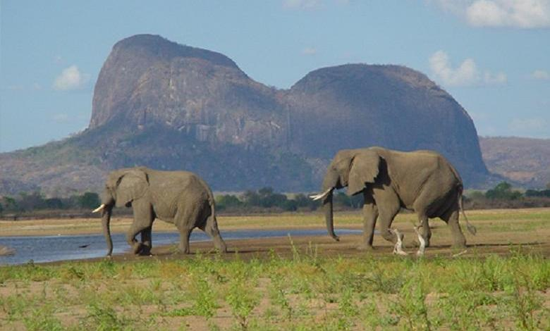 "Photo of Year without elephant poaching in Africa reserve: ""Very hopeful"""