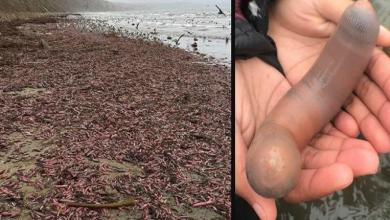 Photo of Beach in California flooded with thousands of 'penis fish'